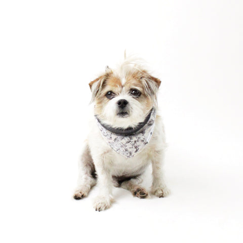 Winston Reversible Tie-on Dog Bandanas and Accessories | Hound and Friends