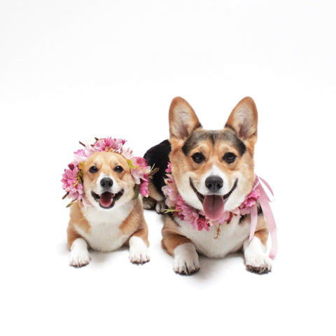 Zelda Flower Crowns for dogs, pets, and people | Hound and Friends