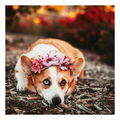 Image of Zelda Flower Crowns for dogs, pets, and people | Hound and Friends
