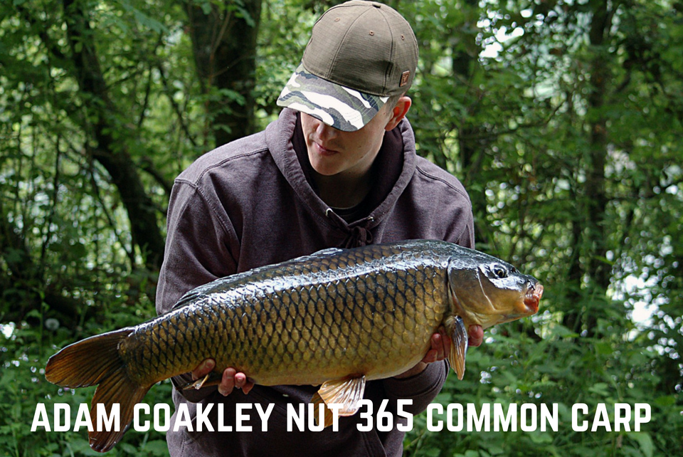 Adam Coakley Common Carp