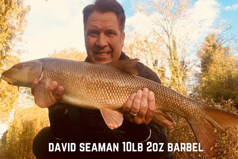 Another Barbel for David Seaman