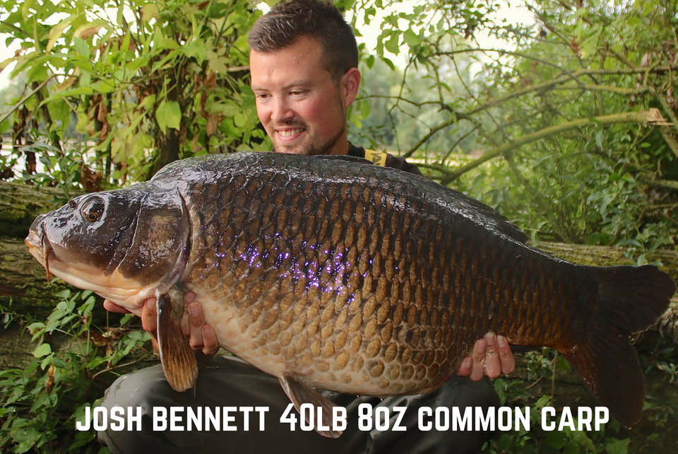 Josh Bennett 40lb 8oz Common