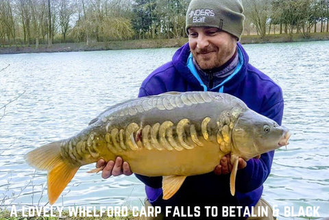 Whelford Carp caught on Betalin & Black