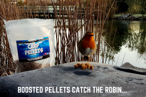 This Robin loves our Boosted Pellets