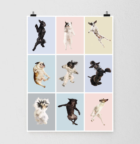 Flying Dogs Poster 3x3