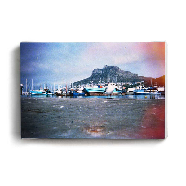 Canvas Print Gull | www.iiilovelocal.com