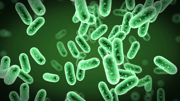 Can bacteria help with skin conditions like acne, eczema?