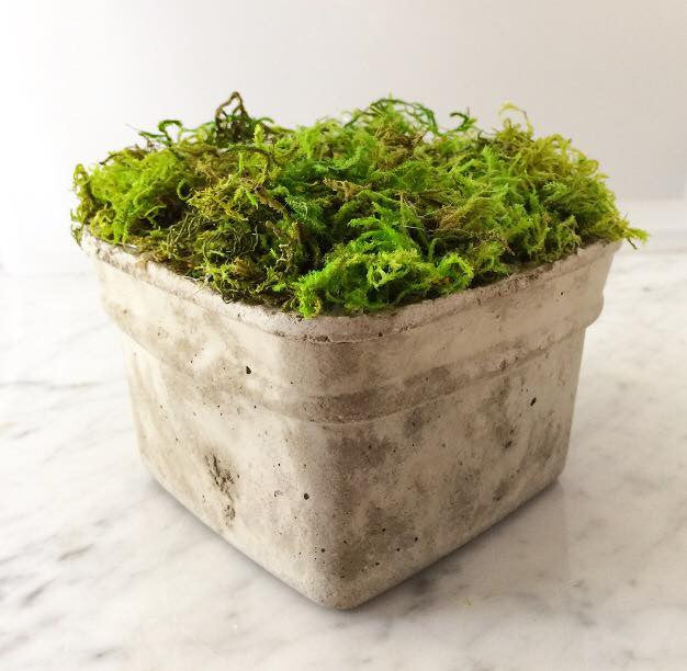 Smooth Square Concrete Moss Pot