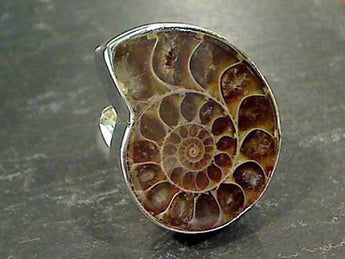 Ammonite, Fine Sterling Adj. Size Ring