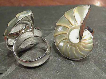 Nautilus Shell, Fine Sterling Ring, Adj. Size