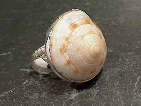 Sundial Shell, Fine Sterling Ring, Adj. Size