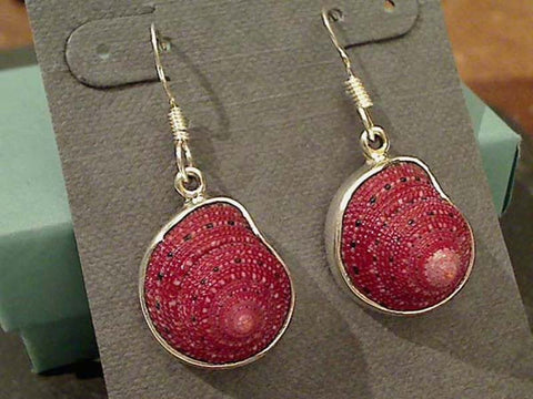 Strawberry Shell, Fine Sterling Earrings