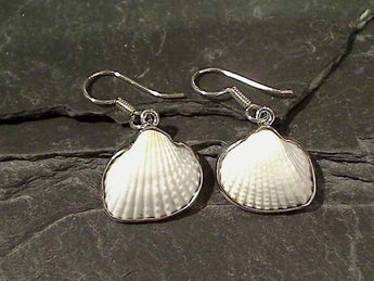 Ark Shell, .950 Fine Sterling Earrings