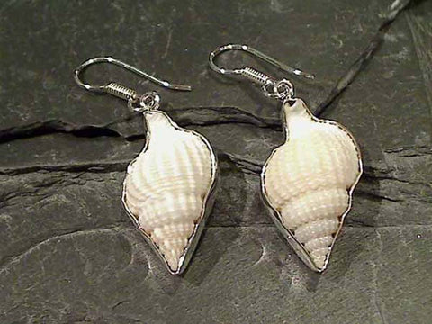 Sea Shell, .950 Fine Sterling Earrings