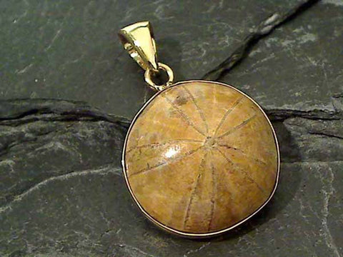 Fossil Sand Dollar, Alchemia Large Pendant