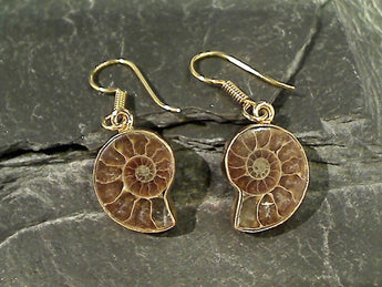 Ammonite Fossil, Alchemia Earrings
