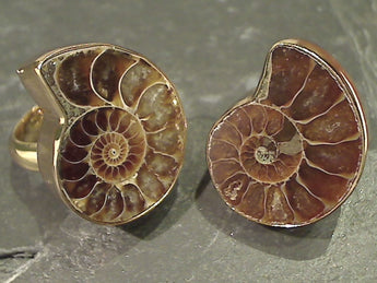 Ammonite, Alchemia Ring - Adjustable Size
