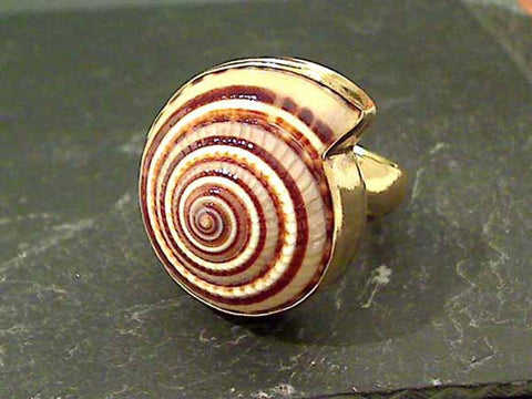 Sundial Shell, Alchemia Adjustable Ring