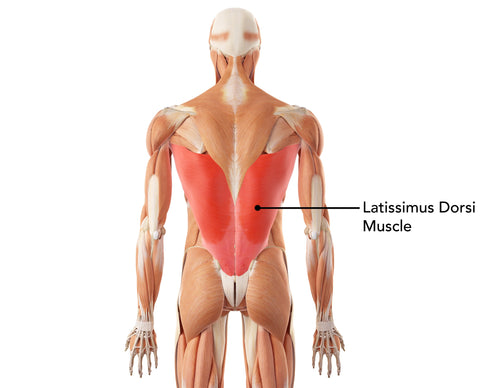 Latissimus Dorsi Lower Back Muscle Massage Ball