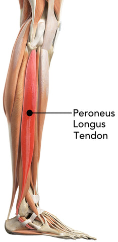 Peroneus Longus Tendon Shin Muscle Massage Ball