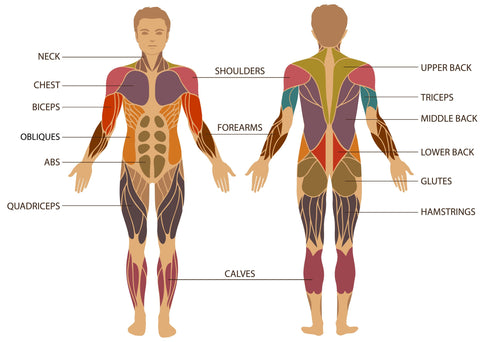 Plyopic Massage Ball Muscle Map Treatment Areas
