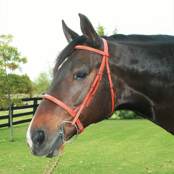Edgewood Hunter Bridle Padded Fancy Stitched Plain Raised