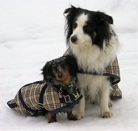 Foggy Mountain Baker Dog Turnout Blanket