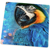 Exotic Blue Gold Macaw Square Sandstone Coaster