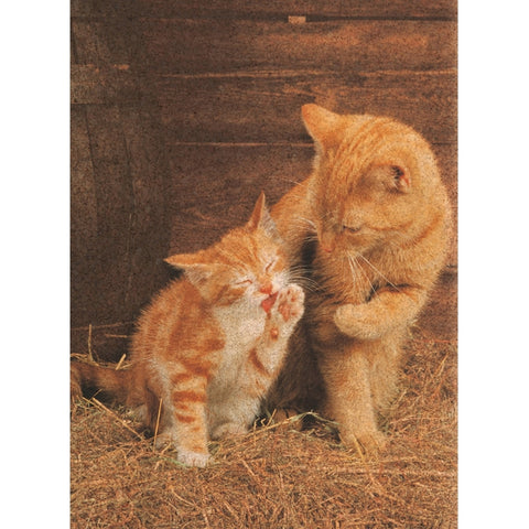 Ginger Cats Cork 500 Piece Jigsaw Puzzle