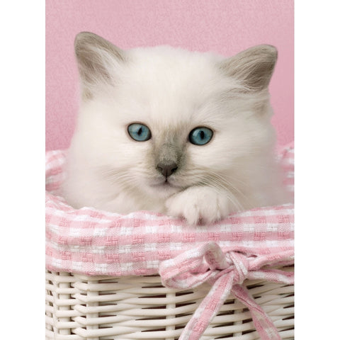 Sweet Kitten Eyes Mini Jigsaw Puzzle