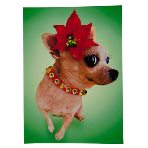 Chihuahua with Poinsettia Christmas Card Set
