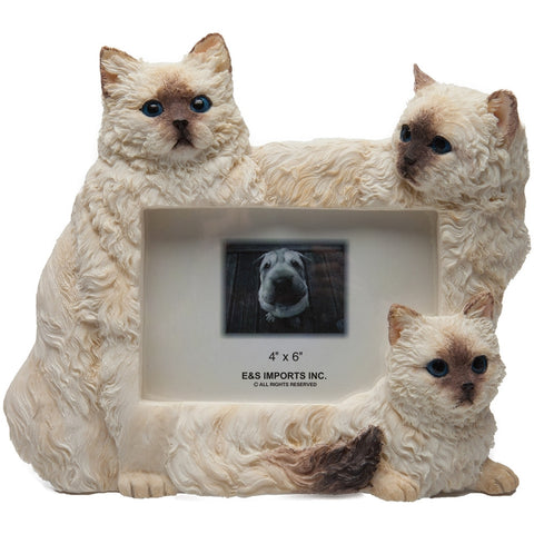 Himalayan Cats Large Picture Frame