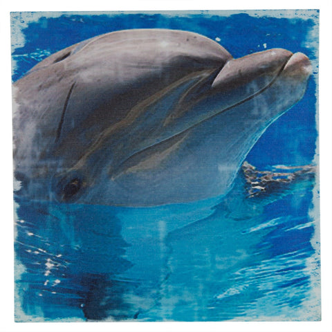 Grinning Dolphin Canvas Art