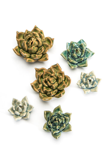 Set of Three Succulents