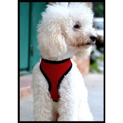 Breathable Dog Harness - Aladdin's Treasures