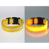 Glow-In-The-Dark Dog Collar - Aladdin's Treasures