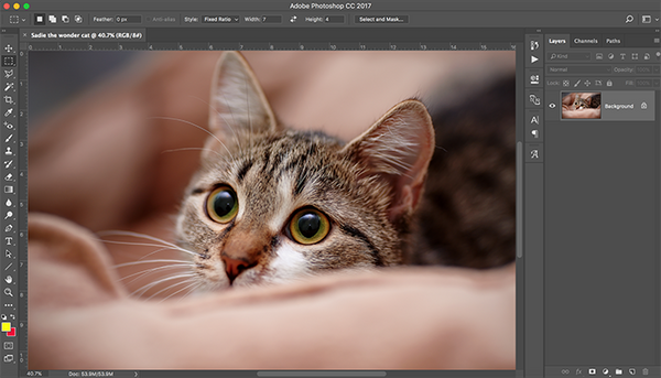 Looking to Get started in Photoshop?