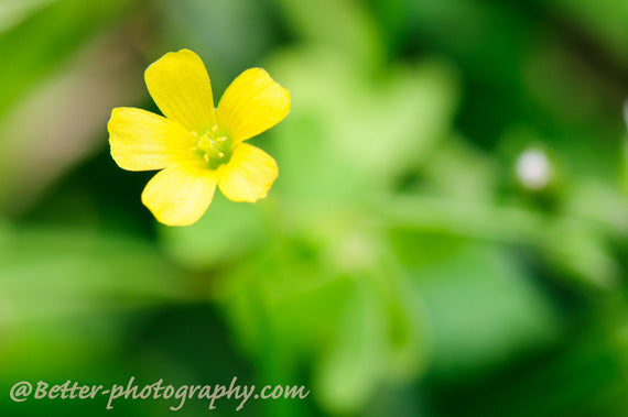 The best tips for flower photography