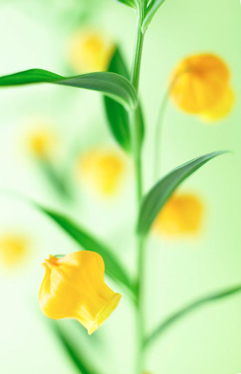 digital photography: flowers