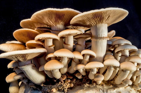 Can mushrooms save the world? Paul Stamets says Yes!