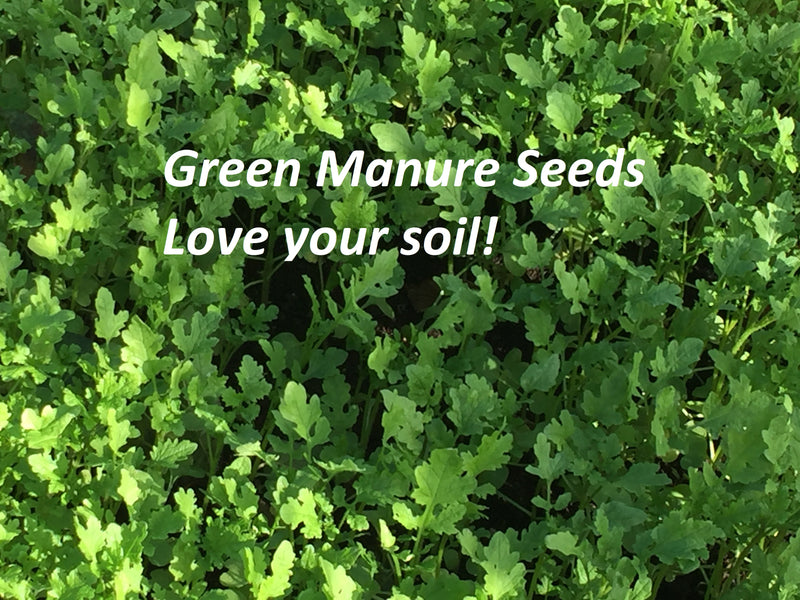 To green manure or not to green manure, that is the question…