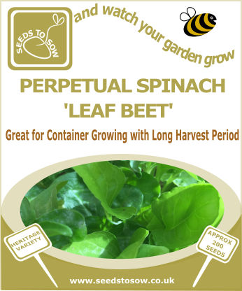 Perpetual Spinach 'Leaf Beet' - Seeds to Sow Limited