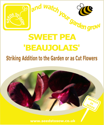Sweet Pea - Beaujolais - Seeds to Sow Limited