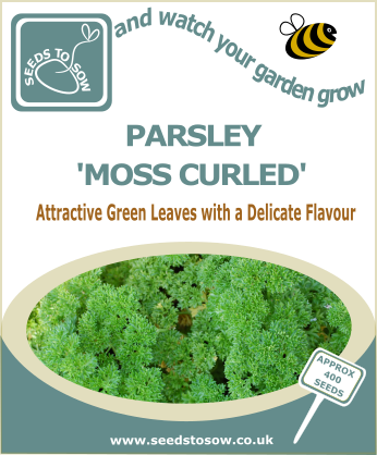 Parsley Moss Curled - Seeds to Sow Limited