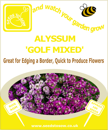 Alyssum - Golf Mixed