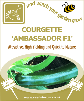 Courgette Ambassador F1 - Seeds to Sow Limited