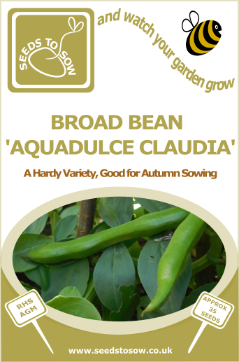 Broad Bean Aquadulce Claudia