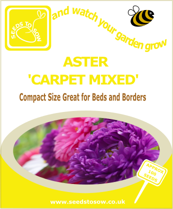 Aster - Carpet Mixed - Seeds to Sow Limited