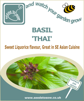 Basil Thai - Seeds to Sow Limited