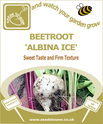 Beetroot Albina Ice - Seeds to Sow Limited